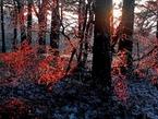 Волшебный лес в Турции