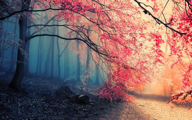 Сказочная осень