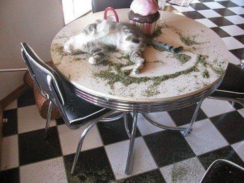 Коты и валерьянка