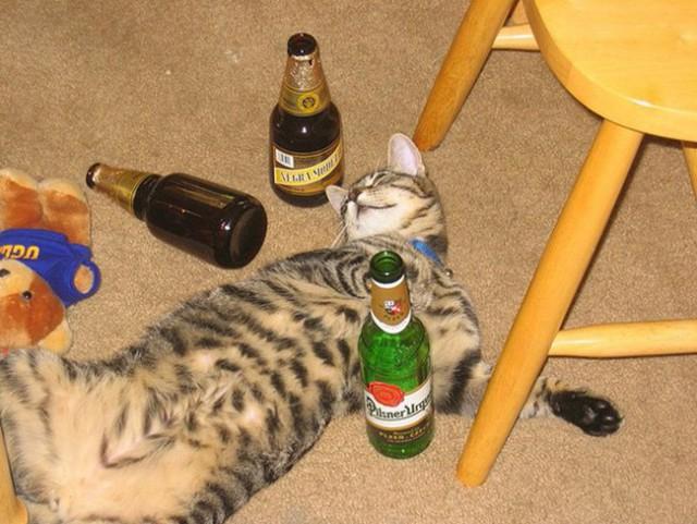 Больше не наливать. Пьяные котики