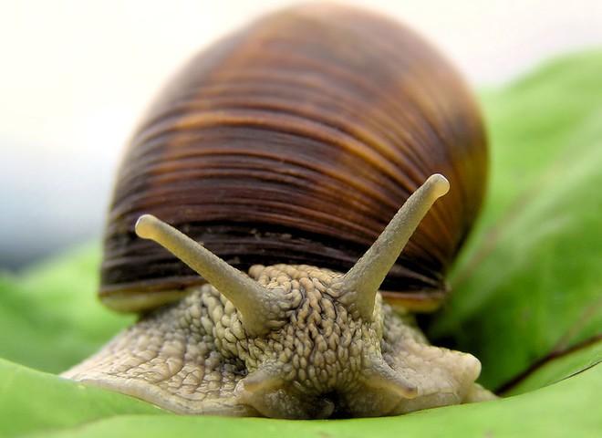 У Іспанії пройде фестиваль любителів равликів