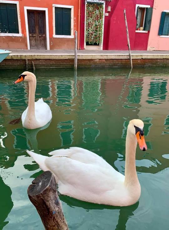 Венеция чистые каналы