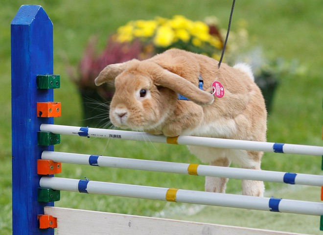 кроличьи бега