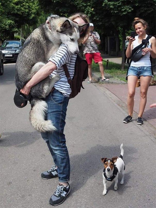 Завел собаку, наконец-то чувствую себя в безопасности