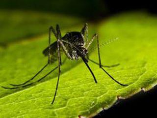 Всесвітній день боротьби проти малярії