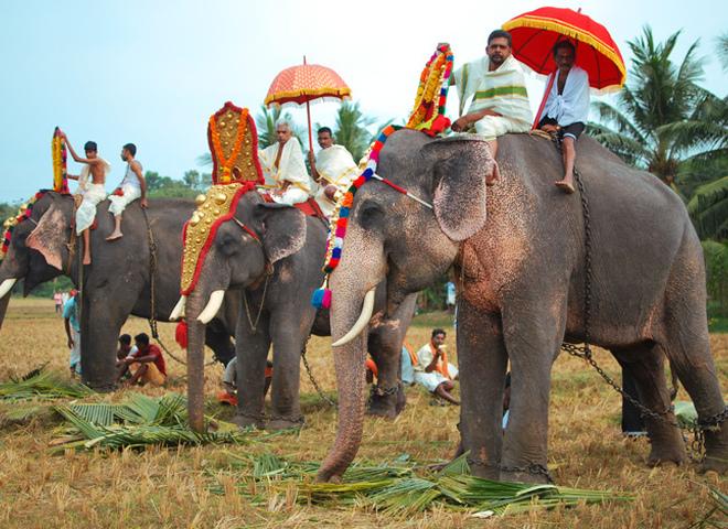 В Индии хотят запретить катание на слонах