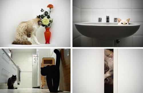 Кошки - лучшее украшение Вашего дома