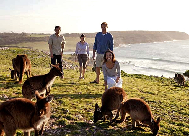 Где встретить дикое животное: Остров кенгуру