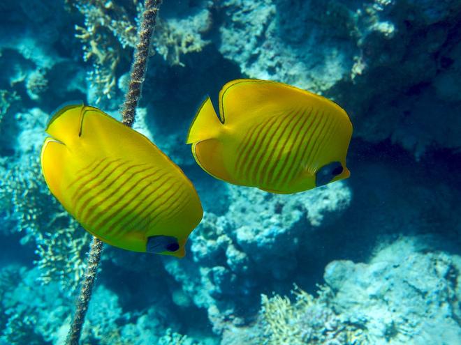 Рыбы Красное море Египет