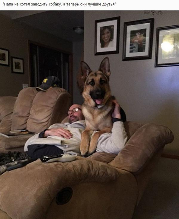 Когда отцы против собаки в доме