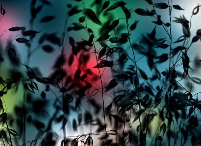 Сюрреалістична макрозйомка в фотографіях Луїса Маріано Ганзалеса