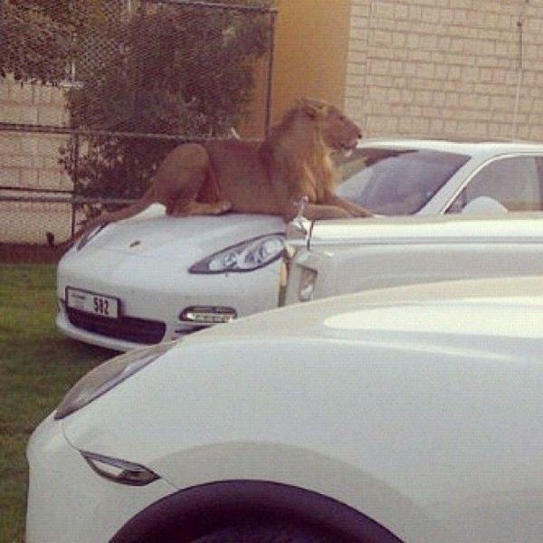 Лучшая охранная система из Эмиратов
