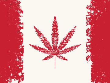 канада конопля