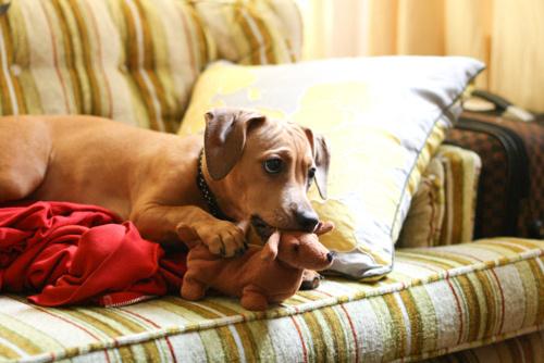 Животные и их игрушечные копии