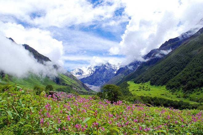 Фотопутешествие: Долина квітів в Індії