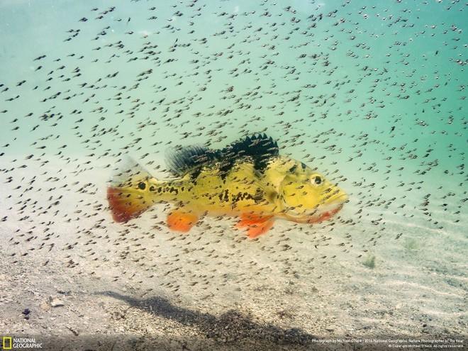 National Geographic опубликовал лучшие снимки дикой природы 2016 года