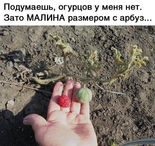 Богатый урожай