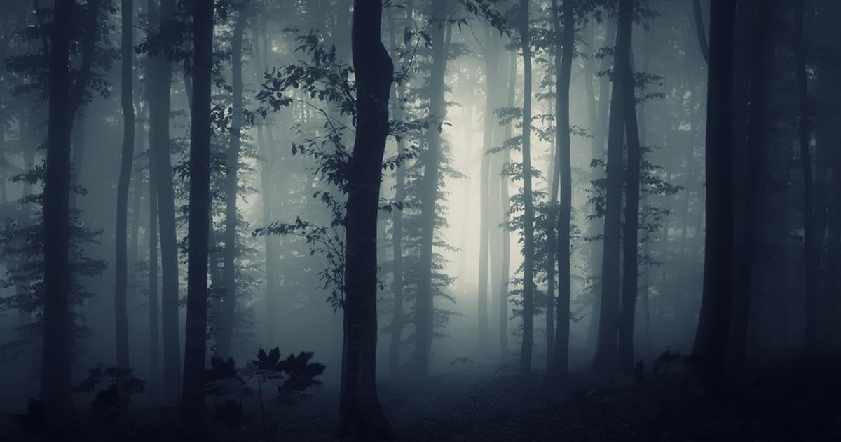 ТОП-5: названы самые страшные леса в мире - Tochka.net
