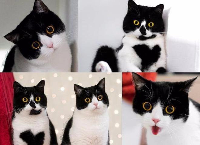 Кот и кошка с самыми удивленными взглядами покоряют Сеть