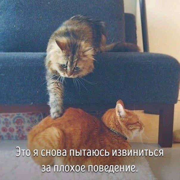 Животные совсем как мы