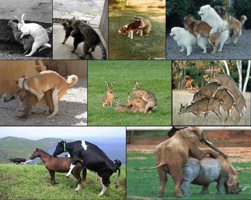 cмешные животные