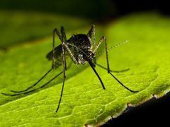 Всемирный день борьбы против малярии