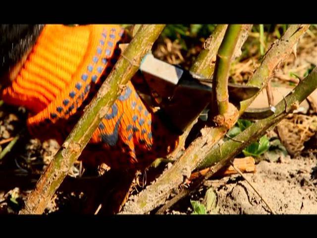 Кунілінгус фото 95401 фотография