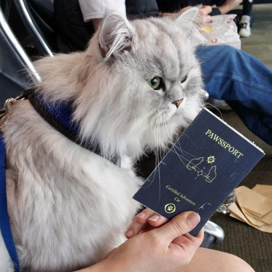 Как путешествует самый счастливый кот в мире?