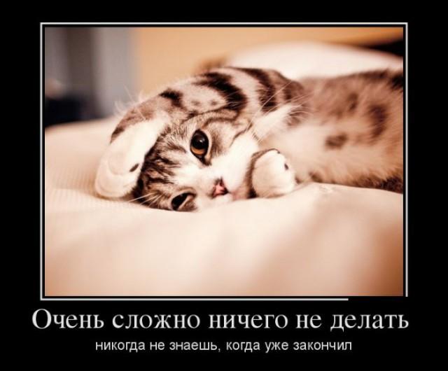 картинки на рабочий стол коты № 520254 без смс