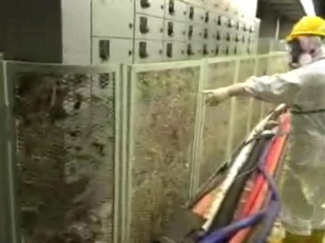 Старики вызвалиcь бороться с радиацией на Фукусиме-1 (фото, видео)