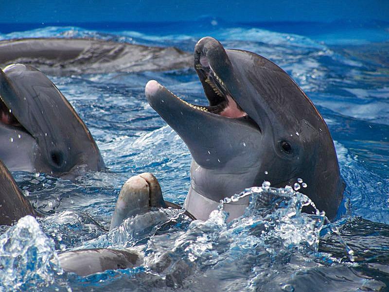 пору, смешные фото с дельфинами другие