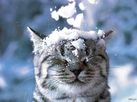 Котик и снежок