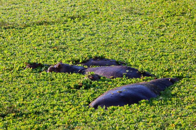 Топ-5 місць, де туриста можуть з'їсти дикі тварини