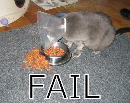 Почему этот кот голоден?