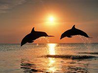 Дельфины на фоне заката