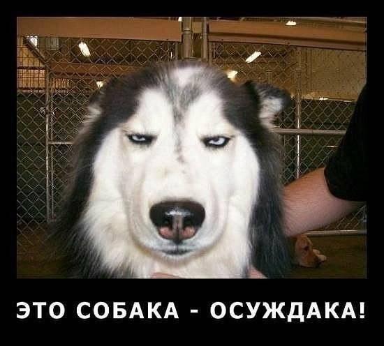 Смешная подборка видов собак