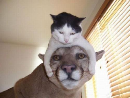 Жизнь котячая