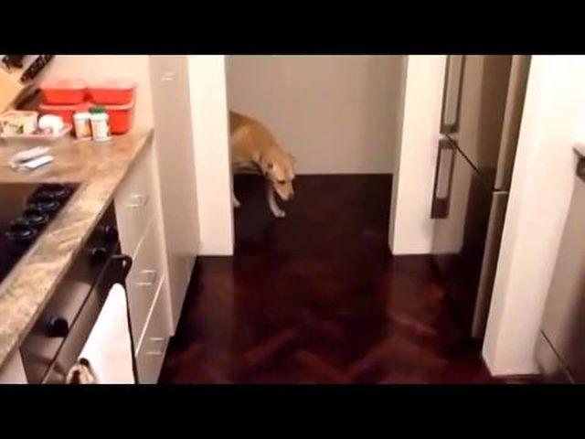 Конкурсы про собаки