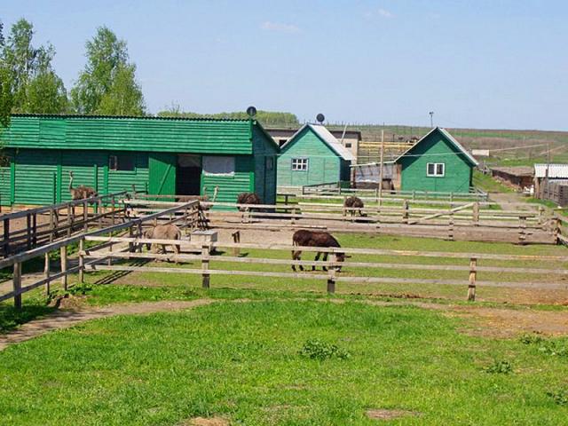 Страусина ферма під Києвом
