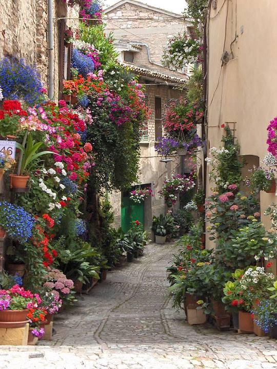 Волшебные улицы в тени деревьев и цветов