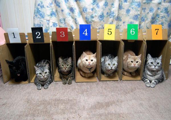 Причина, по которой кошачьи бега непопулярны.