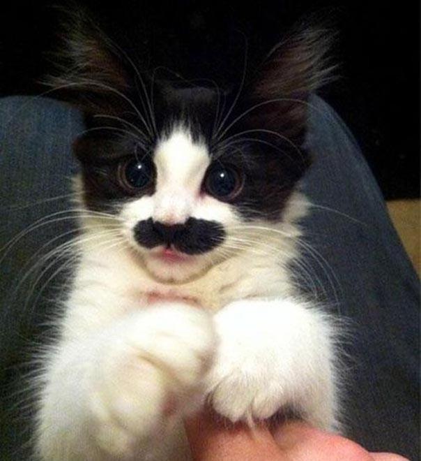 Эти усы вам так идут
