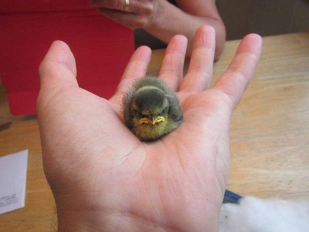 """Прикольное фото с """"Angry bird's"""""""