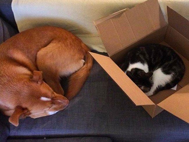 Это любовь! Нежные фото собак и котов