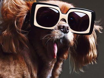 Обличчям нової рекламної кампанії Karen Walker стала собака