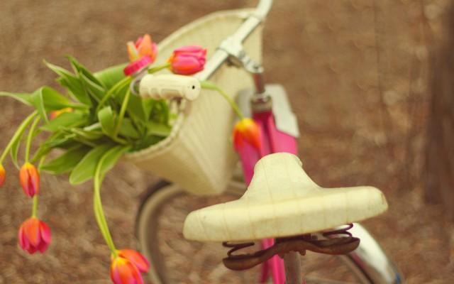 Тюльпаны на велосипеде