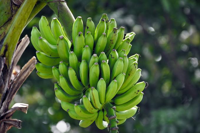 7 корисних властивостей бананів