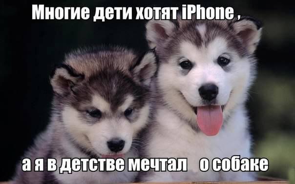 Что лучше: айфон или няшки?