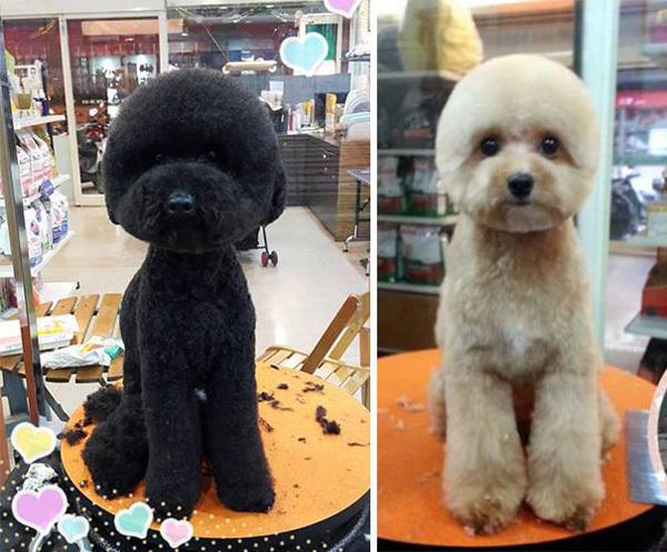 Новый тренд стрижки из Тайваня
