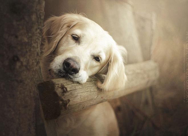 собаки портрети